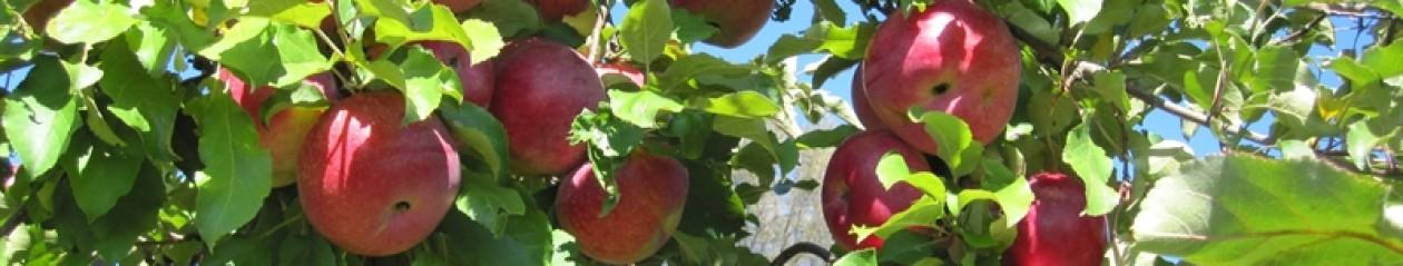 Harvest Moon Orchard