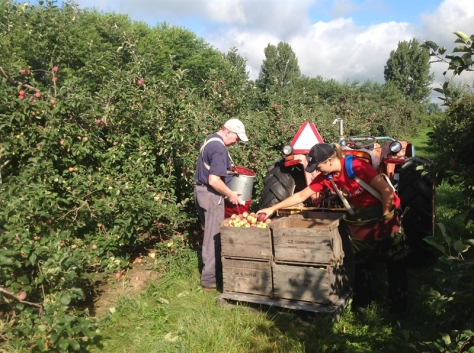 Picking apples at Harvest Moon Orchard