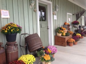 Beautiful local mums  from Brantim farms on the porch make it feel a bit more like autumn!